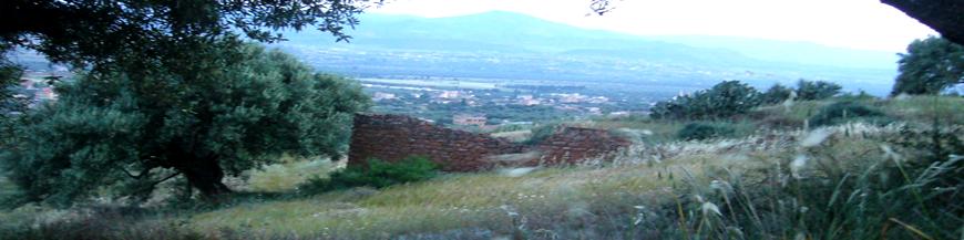 Huiles d'olive de Kabylie